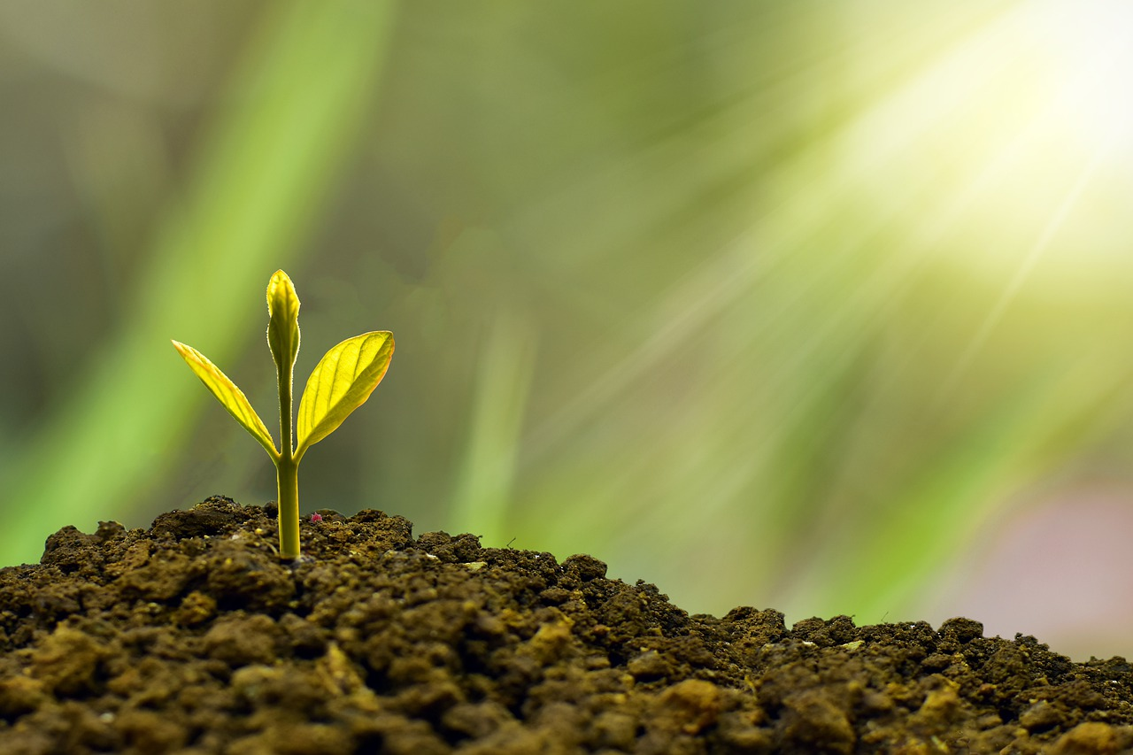 Essential Tips to Grow your Family Business - a small plant sprouts in the sunlight